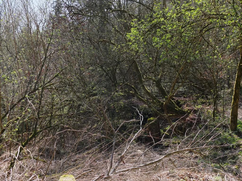 Wandern NRW Velbert Bunker imWaldboden