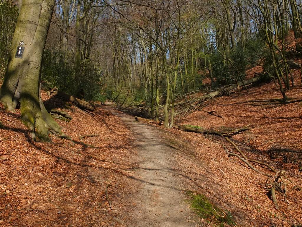 Wandern NRW Velbert  Pfad im Wald