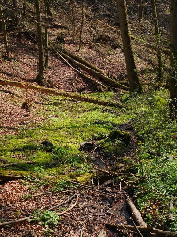 Wandern NRW Velbert Reifen in Flussbett