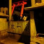 Fushimi Inari Kyoto Katze