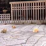 Kyoto - Zen Katzen Tempel