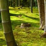 Kyoto Bambuswald abgeholzte Palme