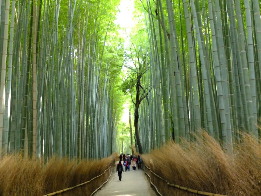 Kyoto Bambuswald weg mit menschen